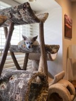 Happy Dog in a Cat Tree