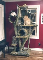 3 cats in  a large tree